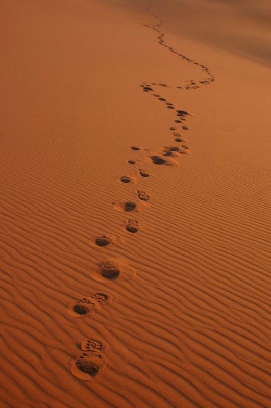 Walking Through a Spiritual Desert Searching for Truth